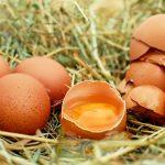 Embarazo y Huevos